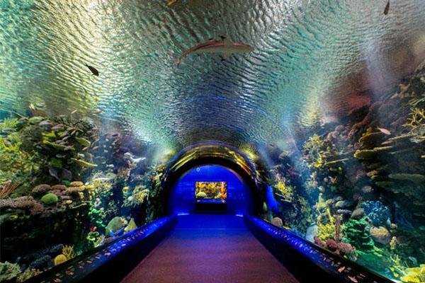 coney island aquarium ดินแดนแห่งความสนุกโลกใต้ทะล